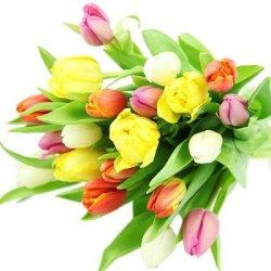 floristikvergleich.de Frische bunte Tulpen als Geschenk im Frühling