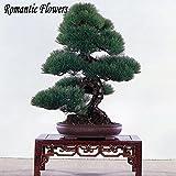 100 partículas Hierba medicinal de cártamo Semillas de flor de agua, planta exótica de jardín Bonsai