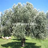 GETSO 30 PC RARA Planta del árbol de Ceniza Fraxinus chinensis Jardín Bonsai Ornamental China Árbol de Hoja caduca Planta BAI La Shu de Tiesto: 2