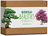 Sow Lush Set de Cultivo de bonsái «Bonsai Beauties», Ideal como Regalo Todo lo Que Necesitas para Cultivar 5 increíbles variedades de bonsáis.