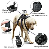 harnais micros2u pour chien Pet Chetch Fetch Strap Strap Belt Mount. Compatible avec GoPro Hero 7 6 5 4 3+ 3 2, Caméra d'action de session