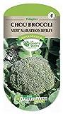 Les doigts verts Semence Chou Brocoli Vert Marathon HYB.F1