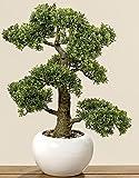 Home Collection Muebles, decoración, plantas artificiales - Boj Común bonsai artificial en macetero - material: plástico - Color natural - dim. Altura aprox. 48 cm