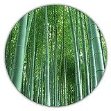 Bambù gigante (Moso Bambus) / 50 semi / resistente al freddo / cresce di 10 metri a una velocità da record / ideale come protezione dalla vista e dal vento