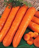 Just Seed - Organic - Vegetable - Carrot - Early Nantes - 500 Seed - Economy Pack