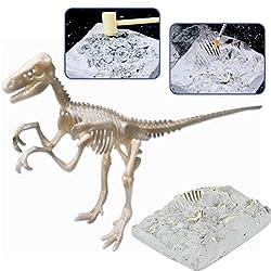 deAO Esqueleto Fósil de Dinosaurio Kit de Paleontología Figura de Juguete con Huesos Simulados Actividad Educativa Infantil (Velociraptor)