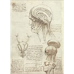 Póster 30 x 40 cm: Brain and Skull de Leonardo da Vinci