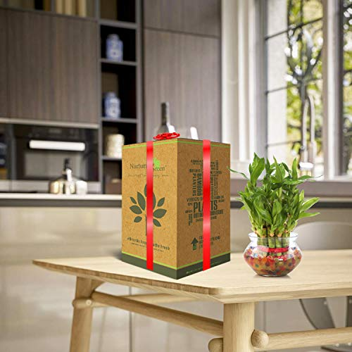 Nurturing Green Special Rakhi Combo - Lucky Bamboo Two Layer in Round Glass Pot & Classic Kit 7