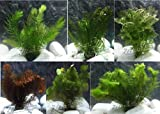 10 Plantas acuáticas Oxigenantes para acuario agua dulce. Cabomba, Elodea, Ambulia, Cola de zorro, Miriophillum.