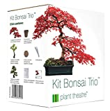 Plant Theatre Kit Bonsai Trio - 3 árboles de Bonsai distintivos para crecer.
