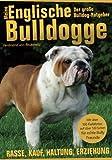 Meine Englische Bulldogge - Der Bully Ratgeber