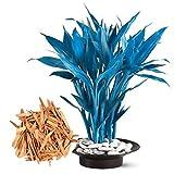 ADOLENB Seed House - Semillas de bambú azul Bonsai de interior Estilo exótico decorativo Semillas de bambú Plantas ornamentales resistentes perennes para su jardín y hogar