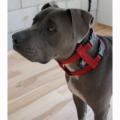 Original Illusion Collar Trainingshalsband & Leine des amerikanischen Hundeflüsterer Cesar Millan, Größe L, Rot