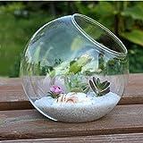 Kicode Rond Transparent Vase en Verre Bouteille à Suspendre pour Terrarium hydroponique Container Home Table Mariage Décor de Jardin 15cm