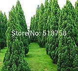 Potseed Semillas seedsplant Fresco Juniperus chinensis 'Kaizuka'