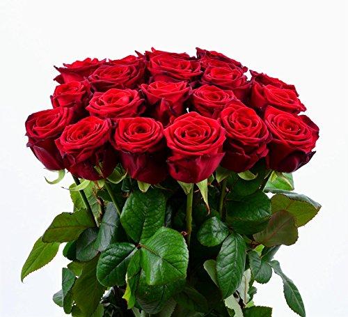 floristikvergleich.de Blumenversand – 12 Stück rote Rosen Red Naomi – Extra Qualität – aus Holland- mit Gratis – Grußkarte zum Wunschtermin!
