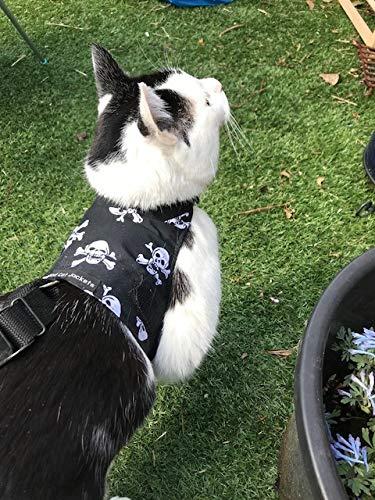 Mynwood Cat Jacket arnés para gato adulto con diseño de calaveras, a prueba de fugas