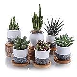 T4U 7CM Pot de Succulent en Céramique avec Plateau en Bambou Lot de 6, Cactus Plante Planteur Cache Pot Jardinière Contenant Décoration de Maison Bureau