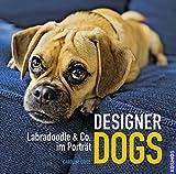 Designer Dogs: Labradoodle & Co. im Porträt