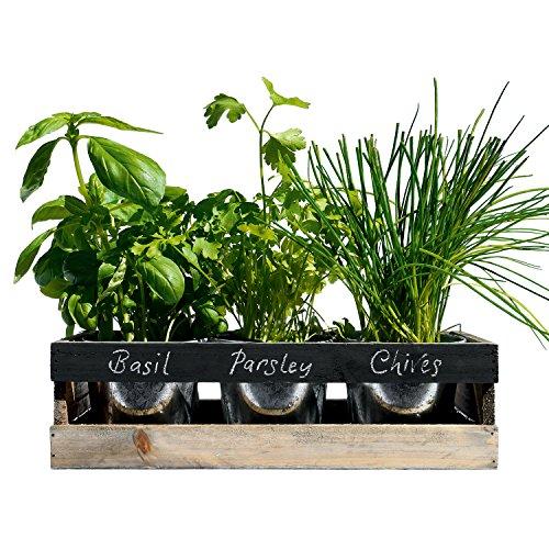 Giardino di Erbe per interni - da Viridescent - Contenitore in legno per davanzali di cucina. Contiene tutto ciò che vi serve per far crescere le vostre erbe aromatiche. Perfetta idea regalo. Disponibile oggi in offerta!