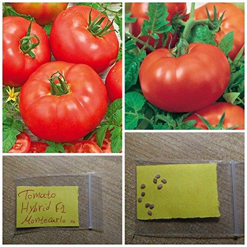 Pomodoro '' F1 Montecarlo '' HYBRID ~ 10 Semi di alta qualità - rosso dolce frutto di grandi dimensioni