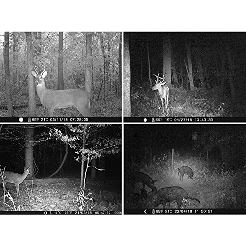 When night time falls, animals will go about their business without noticing the camera working. The manufacturer installed 42pcs 940nm IR LEDs that are able to take well-lit images without producing a flash that might scare the animal in question.
