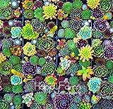 100 Semillas de Cactus y Suculentas