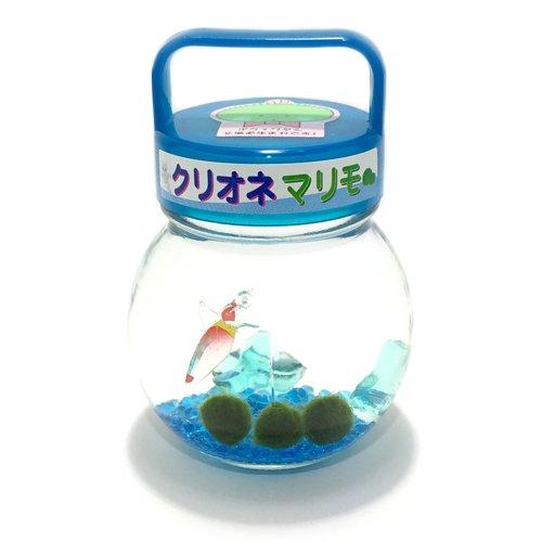クリオネ入りマリモ(ガラス瓶・プラスチック蓋)【水道水で育てられる養殖まりも3個入り】