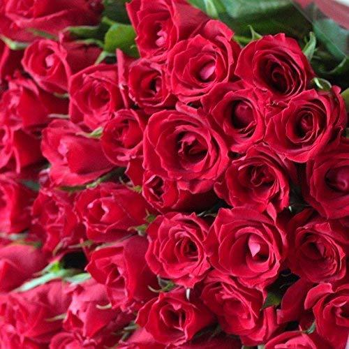 真っ赤なバラの花束は母の日にプレゼントして喜ばれるギフト