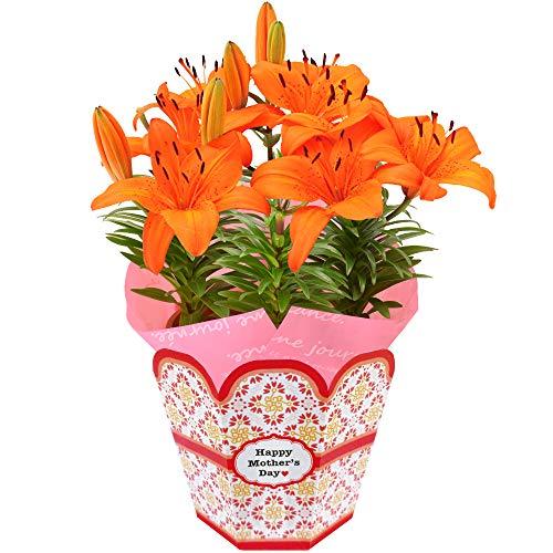 母の日の花束ランキング5位の百合をプレゼント