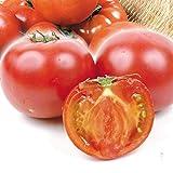 国華園 熊本産他 ご家庭用 トマト 約3.5kg1箱 冷蔵便