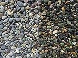 大磯砂 1分 10kg 水槽用底砂利