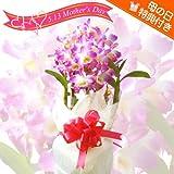 母の日 鉢植え花ギフト 洋ラン/デンドロビューム 花言葉:思いやり 「ミニ植物」のオマケ付き! (人気のピンク)