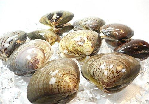 殻付 はまぐり L サイズ 500g 約10個から15個 【 蛤/ハマグリ 】冷凍品