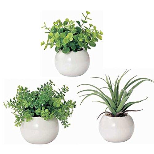 3000円で贈れる観葉植物は気の利いたプレゼントで人気