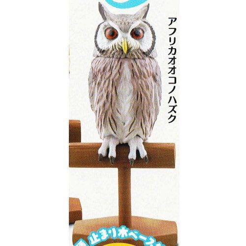 カプセルQミュージアム 福をよぶ フクロウ大全3 [3.アフリカオオコノハズク](単品)