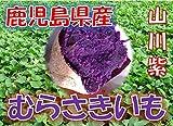 鹿児島県産 むらさきいも 紫芋 「山川紫」 1箱:約5kg サイズ:Sサイズ以上の混合 新芋(2019年産)