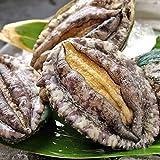 エゾアワビ Lサイズ 3枚 あわび 鮑 BBQ バーベキュー 網焼き 貝類 貝 海鮮 海産物 お刺身