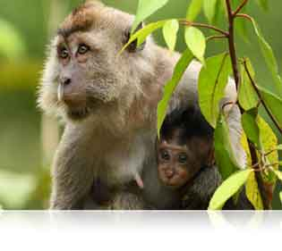 Nikon D500 DSLR photo of a monkey and her baby showcasing clarity and versatility