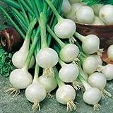 200 Seeds White Sweet Spanish Onion (Allium cepa White Sweet Spanish) Garden Vegetable