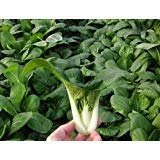1000+ Bok Choy or Pak Choi Chinese Cabbage Seeds Vegetable Seeds