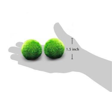 Luffy-Marimo-Moss-Balls-Beautiful-and-Natural-Aquarium-Decor-Perfect-Heirloom-Gift-Symbolize-Eternal-Love