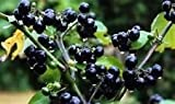 20 Wonderberry Seeds (Sunberry) -Very easy to grow -COMBINED S/H! See Our Store!