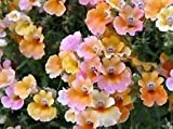 Fash Lady 60+ Nemesia Carnival Mix Flower Seeds/Strumosa/Annual