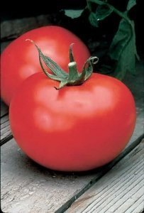 David's Garden Seeds Tomato Slicing Better Boy DGS242RY (Red) 25 Hybrid Seeds