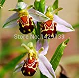 50 Seeds China Rare Flower Bee Orchid Flower Seed Smile Face Interesting Flowers Seed Flora Semillas Bee Gift