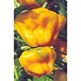 Scotch Bonnet Habanero Pepper 20 Seeds