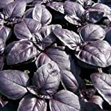 basil, RED RUBIN, herb BASIL, 120 seeds! GroCo