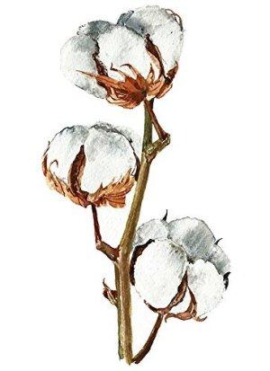 Floral wall art #A108 – Set of 3 (8×10) art prints.Watercolor cotton flower painting. Floral art. Cotton branch posters. Floral art print.Cotton Flowers art.