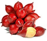 15 salacca zalacca Salak Snake Fruit Seeds Exotic Fruit Rare Ship from Thai d507